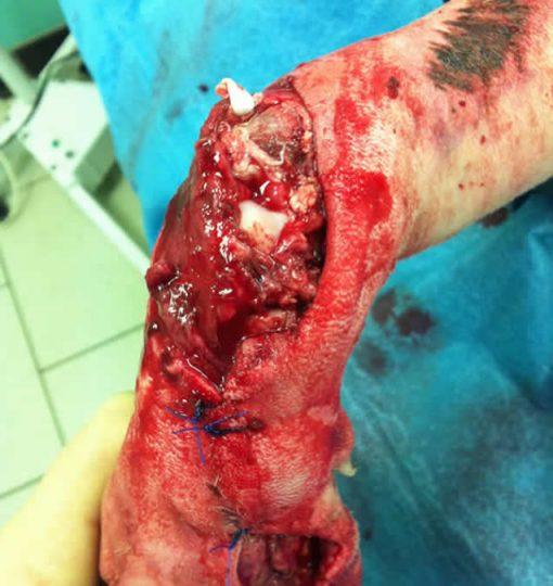 open wound stifle dog