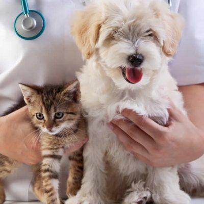 puppy and kitten at vet