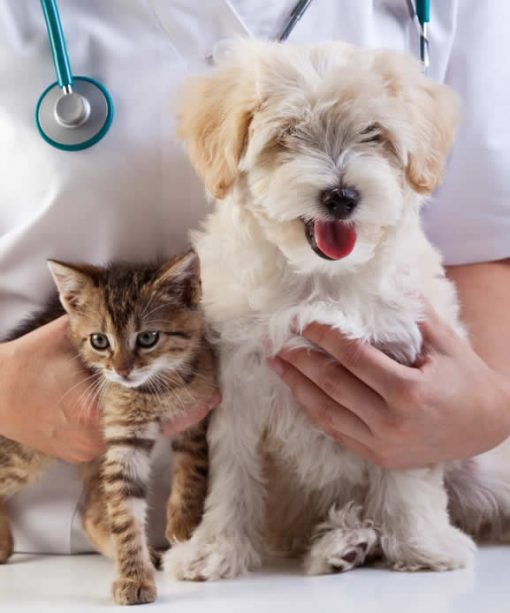puppy and kitten at vet