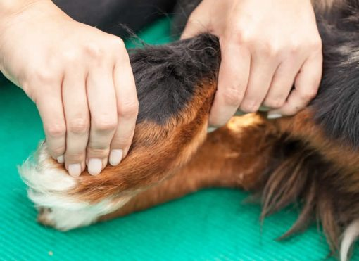 physiotherapy in dog